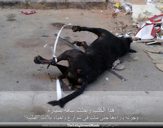 انظروا كيف قتلوا هذا الكلب!